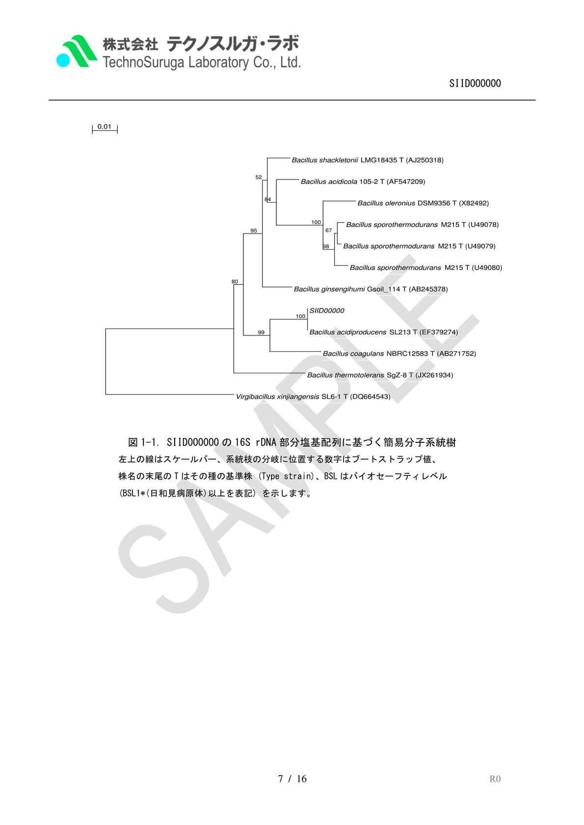 SAMPLE/細菌Premium報告書v4
