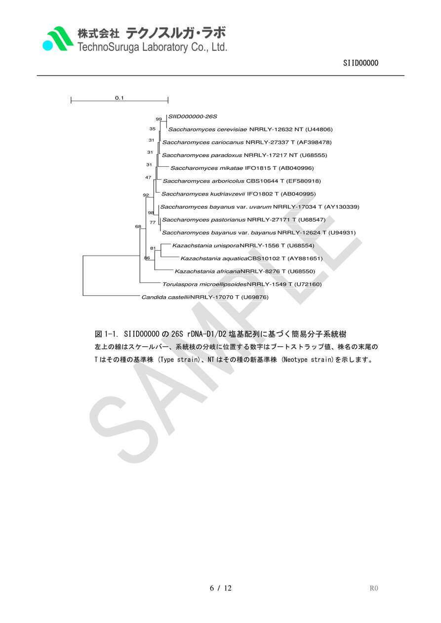 SAMPLE/酵母Standard報告書v4