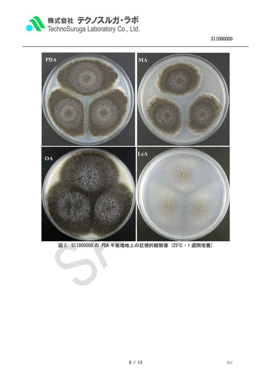 SAMPLE/カビPremium(1遺伝子)報告書v4