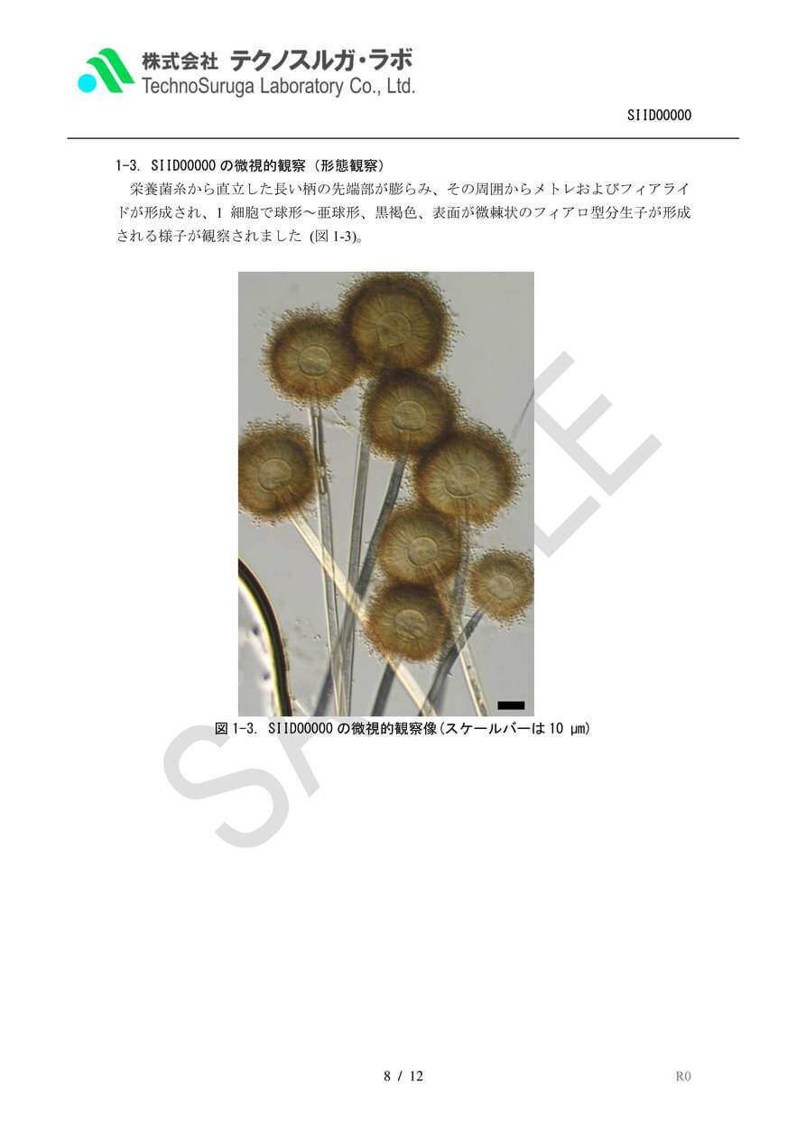 SAMPLE/カビStandard(ITS)報告書v4